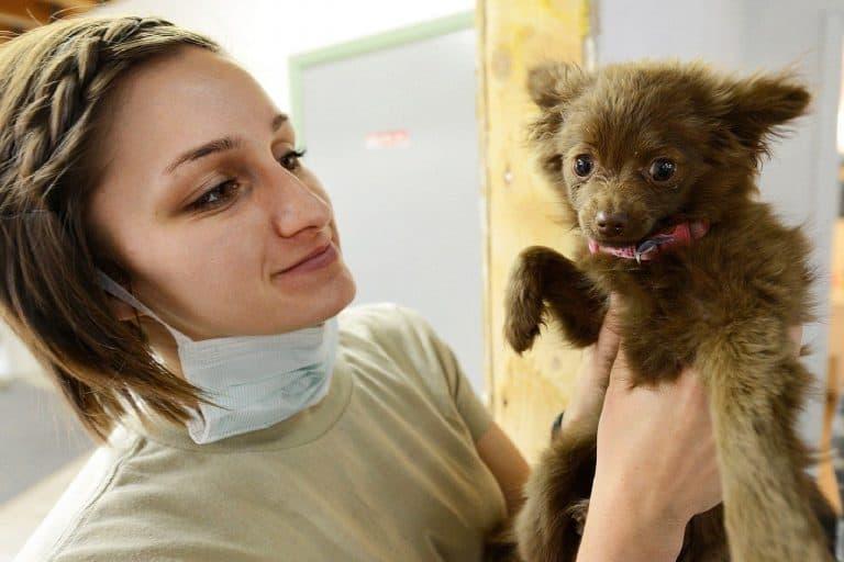 Puppy Vet Veterinarian